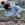Christa Gerke mit den über lange Jahre kultivierten Elatior Begonien